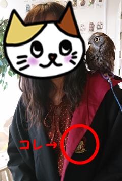 フクロウカフェの写真(愛知県名古屋市、ふくろうのいる森カフェ 栄店)